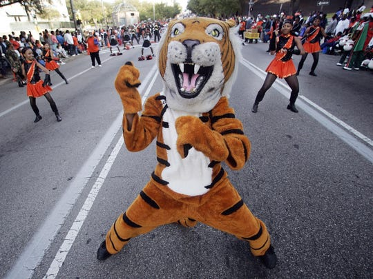 Shanks Middle School's tiger mascot leads the band