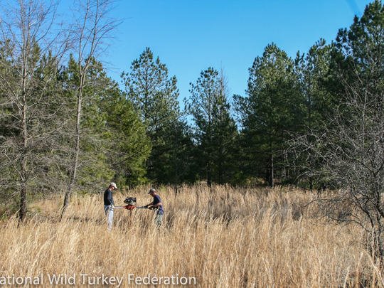 The turkey's return to Michigan is due in large part to habitation enhancements.