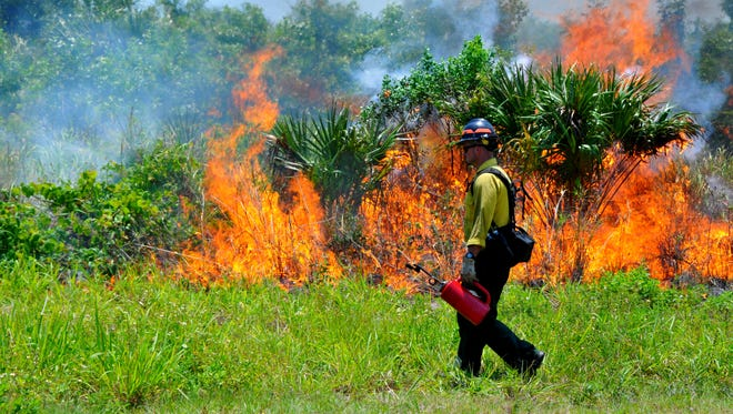 FILE- US Fish & Wildlife firefighters burned 600 acres for a controlled burn on the Merritt Island Wildlife Refuge in May, 2014.