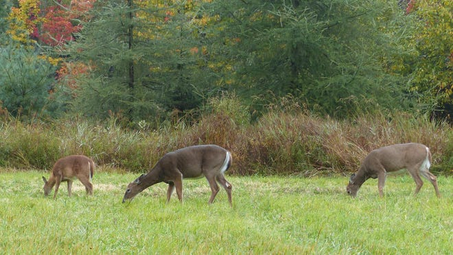 Natural foods are abundant and widespread this year, which means deer are less likely to be found feeding in open fields.