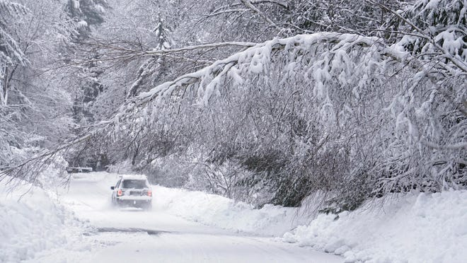 A car travels along Kingsbury Lane in Kennebunk, Maine, on Thursday under a birch tree bowed over under the weight of wet snow.