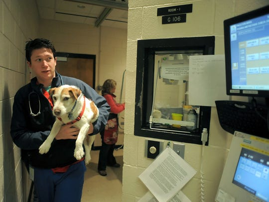 Sean Perry, a fourth-year veterinary student, carries Max, a Jack Russell terrier, after the dog had X-rays taken Feb. 1, 2013, at CSU's Veterinary Teaching Hospital. Max was visiting the Urgent Care center, where he was undergoing diagnostic work and testing.