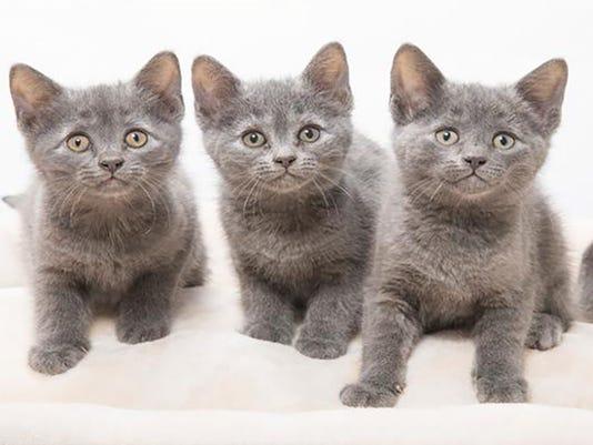 636016041426081956-0615-Presto-Kittens-No-fee.jpg