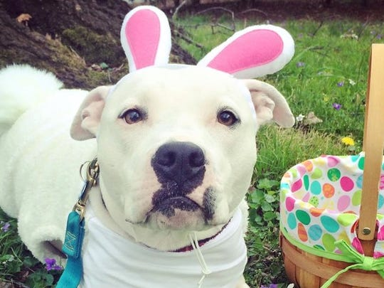 Dogs can hunt for eggs at Fido Spring Fling on Saturday.