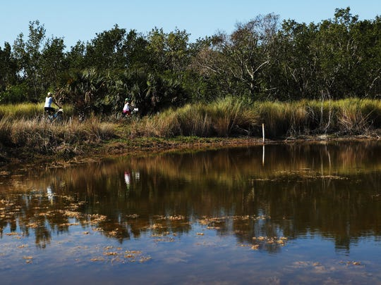 """Ani lake at the J.N. """"Ding"""" Darling Wildlife Bailey Tract will be restored to a freshwater marsh land to aid in the recovery of wildlife that lives in it including the Sanibel rice rat."""