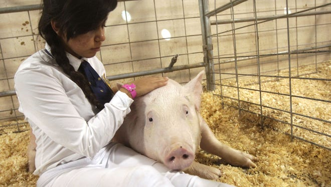 Karime Leon, of Indio High School spends a few last minutes with her hog who had been sold at an auction at the Riverside County Fair & National Date Festival after 8 months of being prepared by Leon as part of her FFA course at Indio High School.
