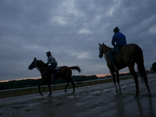 Horses enter the track during morning workouts at Belmont Park in Elmont, New York