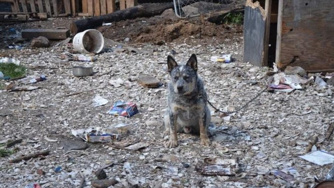 A chained dog on the Medeiros property.