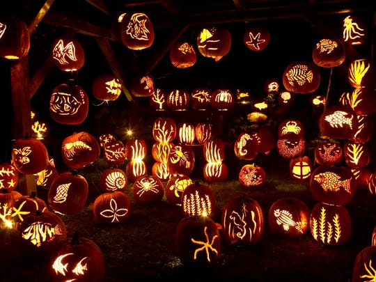 Pumpkins on display at the Great Jack O'Lantern Blaze