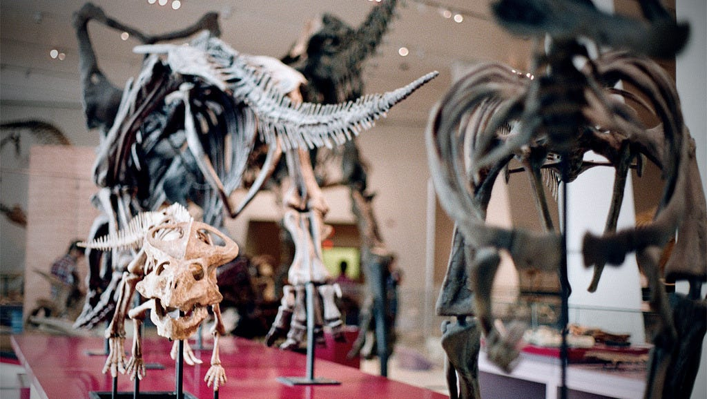 Canada's largest museum of natural history and world cultures houses some six million objects, including an extensive collection of fossils and the largest mounted dinosaur in Canada. Plan to spend a full day at this family-friendly attraction in Toronto.