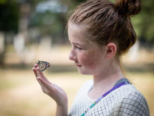 Monarch butterflies will be released Aug. 26 at Elmwood