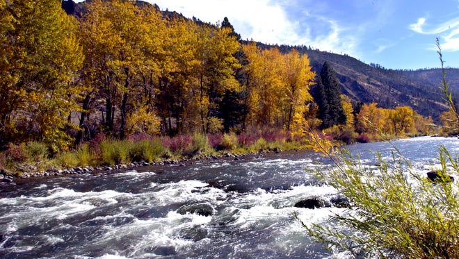 Fall color is nears its peak along the Truckee River between Reno and Truckee.
