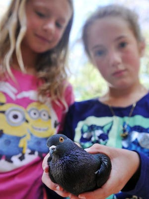 Tara Atkins holds her pet pigeon, Foresta, Wednesday at her friend Lily Templeton's house in Helena.