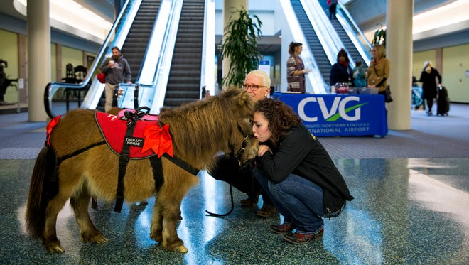 Kate Moad, of Seven Oaks Farm, kisses Harley, a miniature therapy horse, while they wait to greet flyers at the arrivals gate at Cincinnati/Northern Kentucky International Airport Tuesday, February 14, 2017.