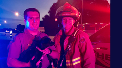 Puppy saved in two car crash on I-95 in Fort Pierce