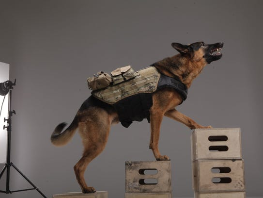 Ghostsdog1101