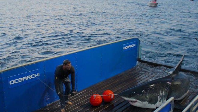 Mary Lee, a shark tagged by OCEARCH in 2012 was off the coast of New Jersey Thursday.