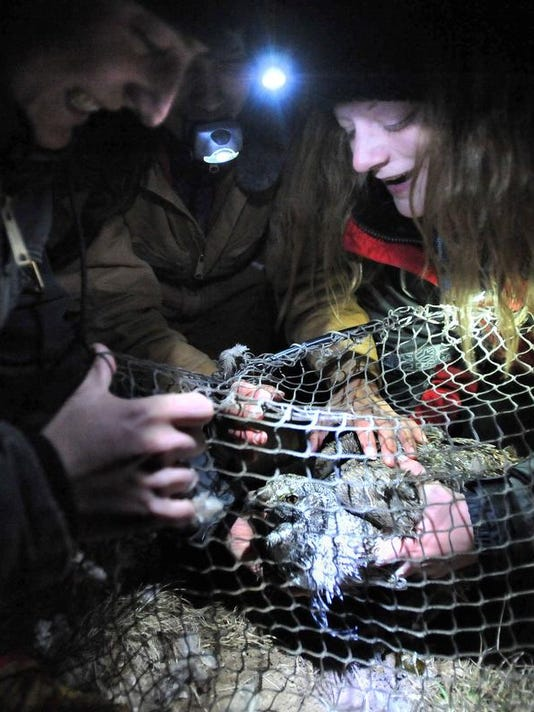 Sage Grouse Trapping (2)