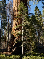 Giant Sequoia National Monument covers 328,000 acres