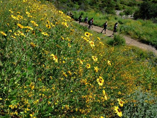 Wildflowers-in-bloom-4.jpg