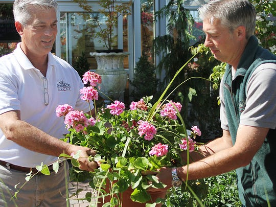 The Luccarelli brothers, Frank, left, and Domenico, right, both of Holmdel, arrange potted plants at their Holmdel shop, Dearborn Market.