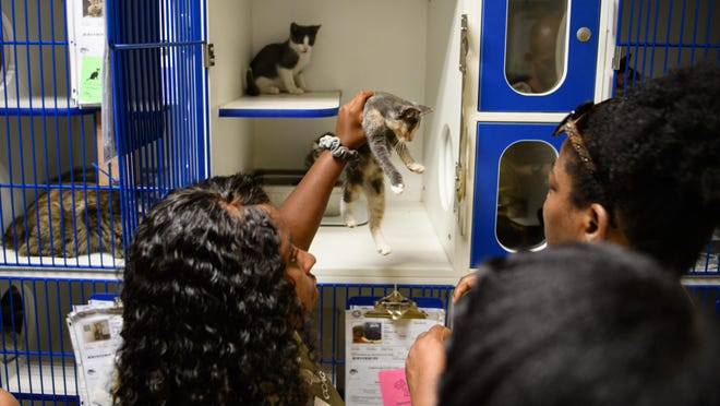 "The Cumberland County Animal Shelter is lowering pet adoption fees in August as part of the ""Clear the Shelters"" initiative."