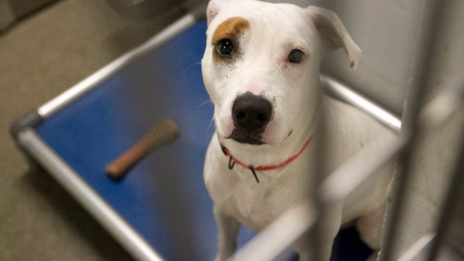 Sally is a 9-month-old hound mix who was found with her sister Babby. Their owner never came to claim them, so they are up for adoption at Lee County Animal Services.