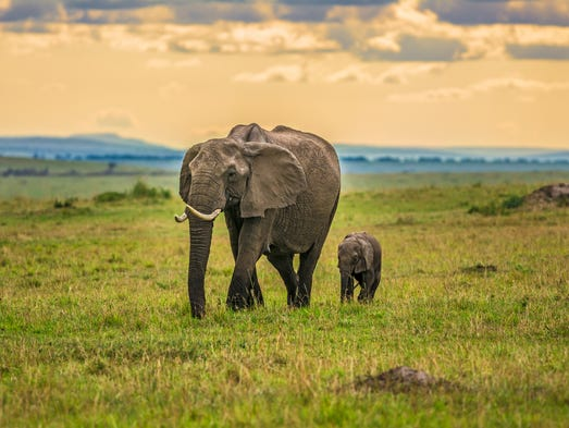 Kenya and Tanzania: Kenya and Tanzania are often combined