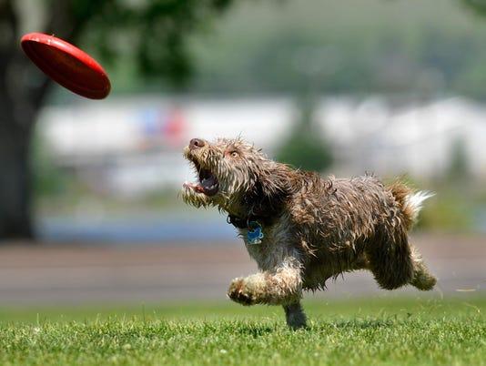 -070611_Frisbee Dog-A.jpg_20110706.jpg