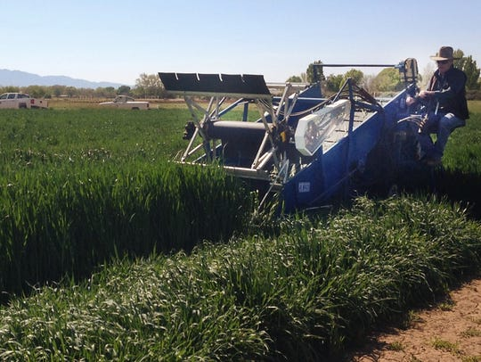 New Mexico State University conducts forage crop research