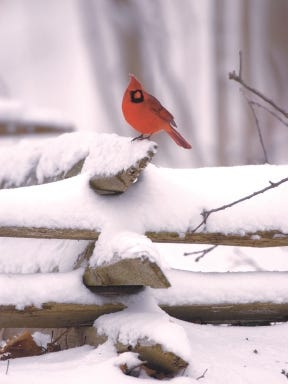 Now is the time to consider moving your bird feeders closer to your home so you can still easily see your birds and you won't have a long path to shovel out to get to them during the winter.