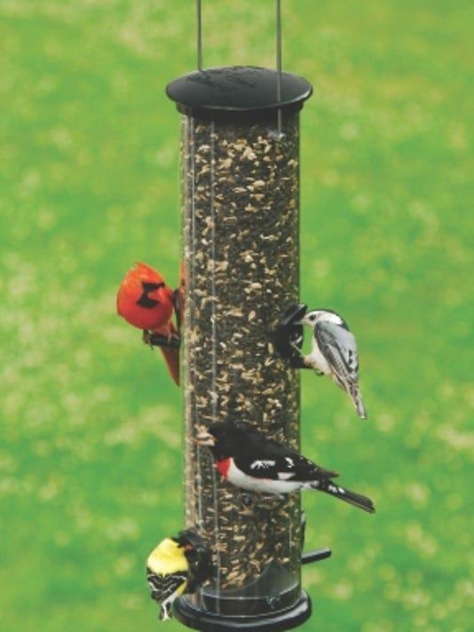 636523048320974182-Variety-of-birds-on-tube-feeder.jpg