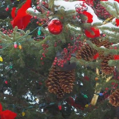 Pa Ventura: O Christmas tree, please don't fall