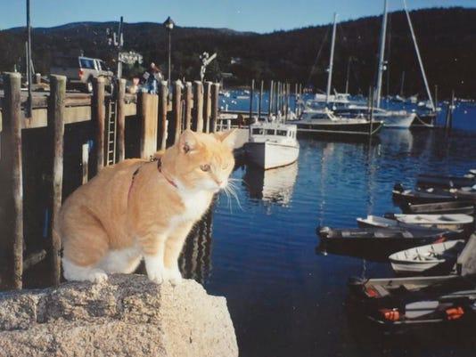 -CAT-24-C6.jpg_20070827.jpg