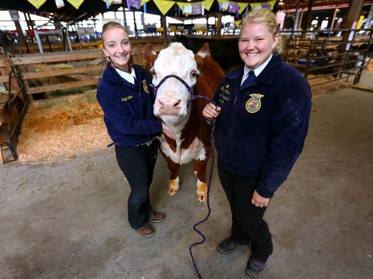 Cascade alumna Payton Hartsell, right, and Jenavee Milkovich, an incoming senior FFA reporter, with Red Box, a Hereford steer, near his stall during the 150th Oregon State Fair, Monday, August 31, 2015, in Salem, Ore. Cascade FFA students have been raising Red Box with the intention to donate his beef to the Marion-Polk Food Share.