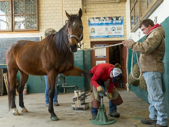 Students in the Cornell University farrier certificate