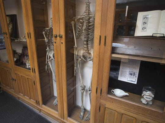 Display cases featuring skeletons for anatomical examination inside the Indiana Medical History Museum.