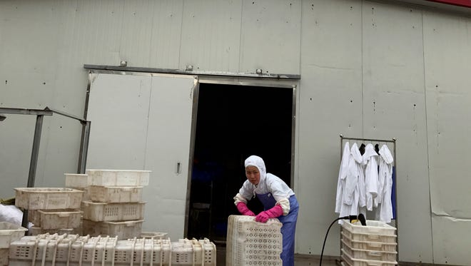 In this Sept. 2, 2017, photo, a worker stacks crates at the Yanbian Shenghai Industry & Trade Co. Ltd., which hires some North Korean workers to process seafood in the city of Hunchun in northeastern China's Jilin province. In an effort to boost the local economy, China and North Korea agreed several years ago to allow factories to contract for groups of North Korean workers, establishing an industrial zone with bargain-priced labor.