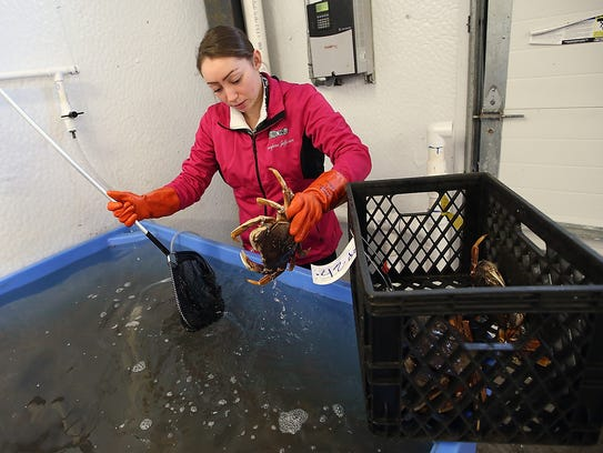 Retail specialist Shaylene Jefferson fishes a Dungeness crab out of the tank for a customer at the Suquamish Seafoods retail shop.