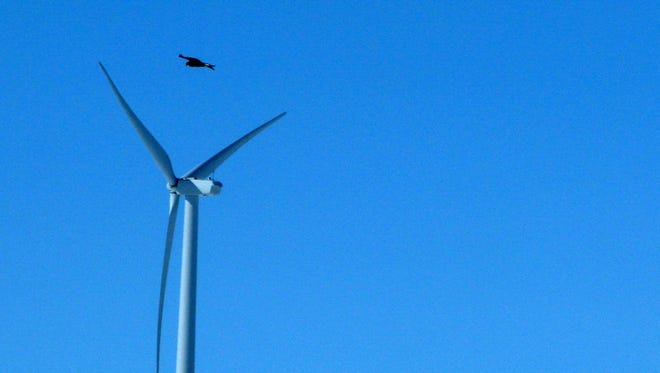 A golden eagle flying over a  wind turbine on Duke energy's top of the world wind farm in Converse County Wyo.