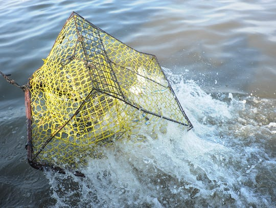 When crab pots like this one are lost underwater, they