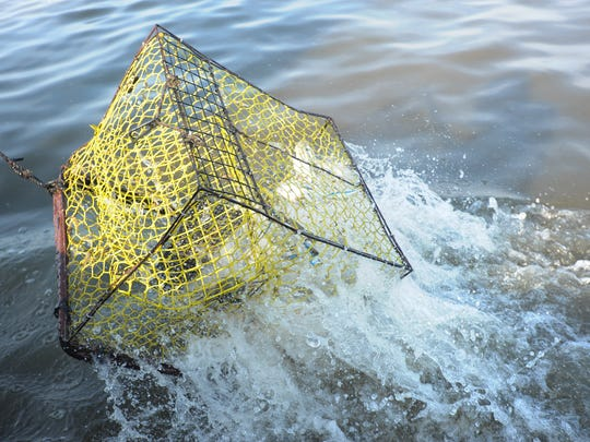 When crab pots like this one are lost underwater, they are known as ghost pots. Not only expensive for crabbers, ghost pots continue to attract wildlilfe for years, detracting from the annual harvest.