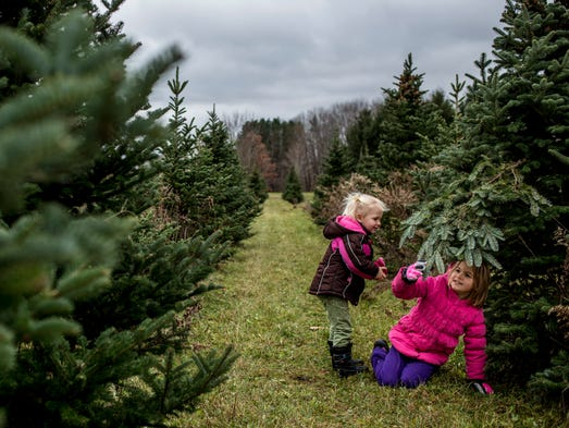 ucut christmas tree farm near me