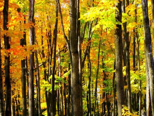 Advertorial-image-2-fall-color-Vilas-County.jpg