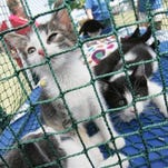 Oakland County Animal Control and non-profit Oakland County Pet Fund want to reduce stray and euthanized cats.