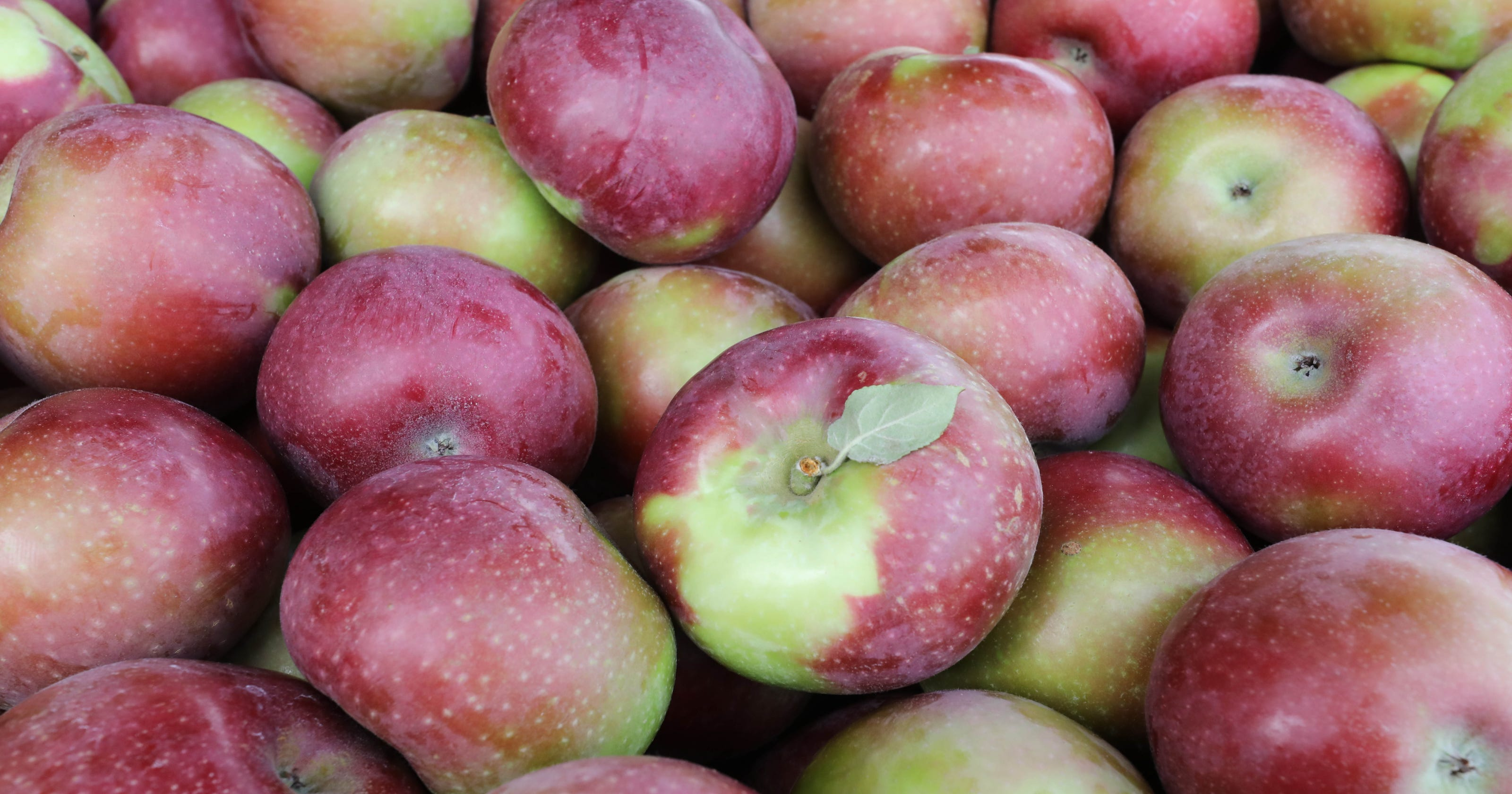 Best Places To Go Apple Picking In Ny