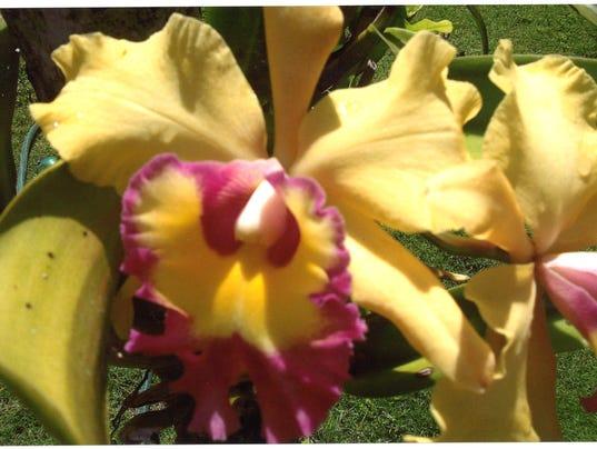 636365514263720369-Floral.jpg