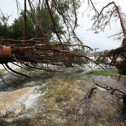 Destroyed trees collect at the mouth of Cypress Creek