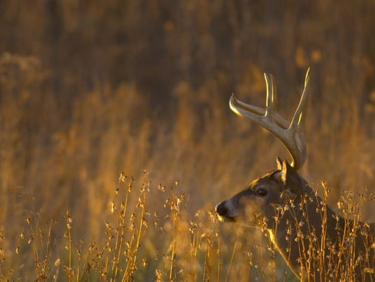 Commentary: If you love deer, you've got to love hunting