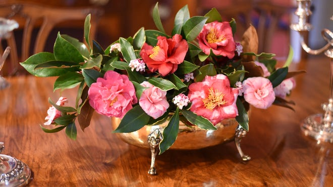A collection of camellias with Daphne and magnolia leaves.